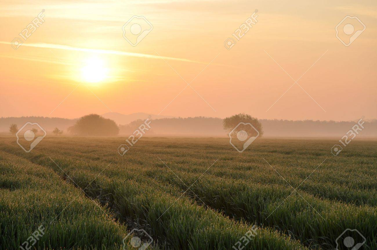 Wheat field in the morning light Stock Photo - 6854437