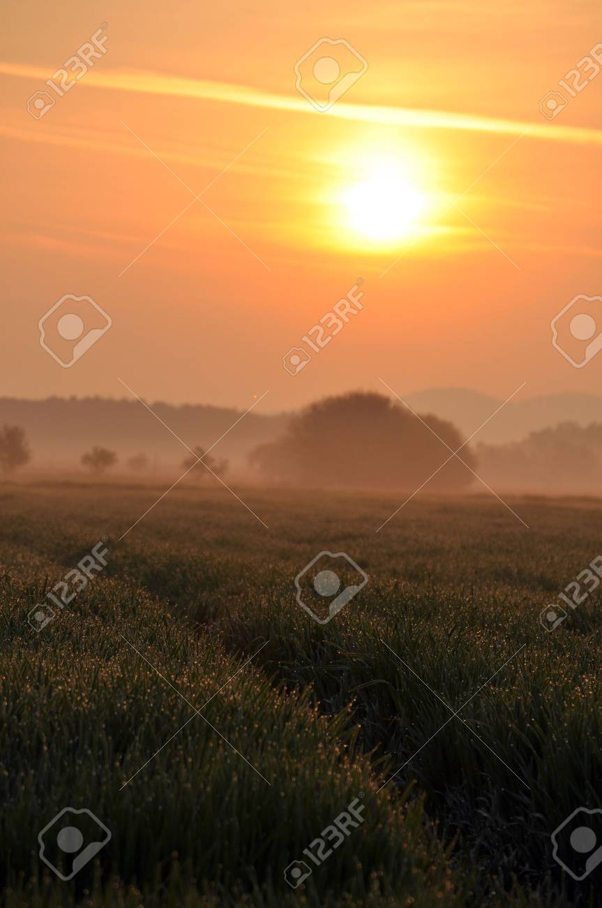 Wheat field in the morning light Stock Photo - 6854440