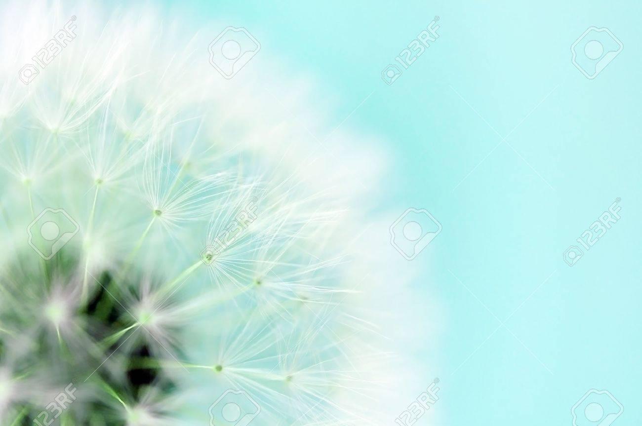Dreamy dandelion macro Stock Photo - 15697138