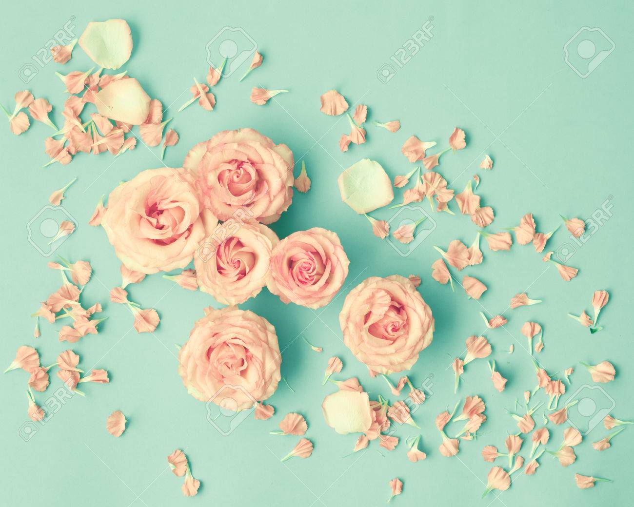 Pink Roses Over Mint Background Stock Photo Picture And Royalty