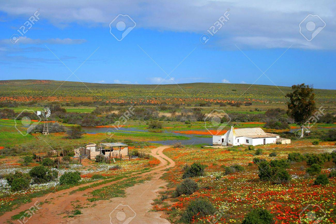 Namakwaland farm with flowers in south africa Stock Photo - 6741634
