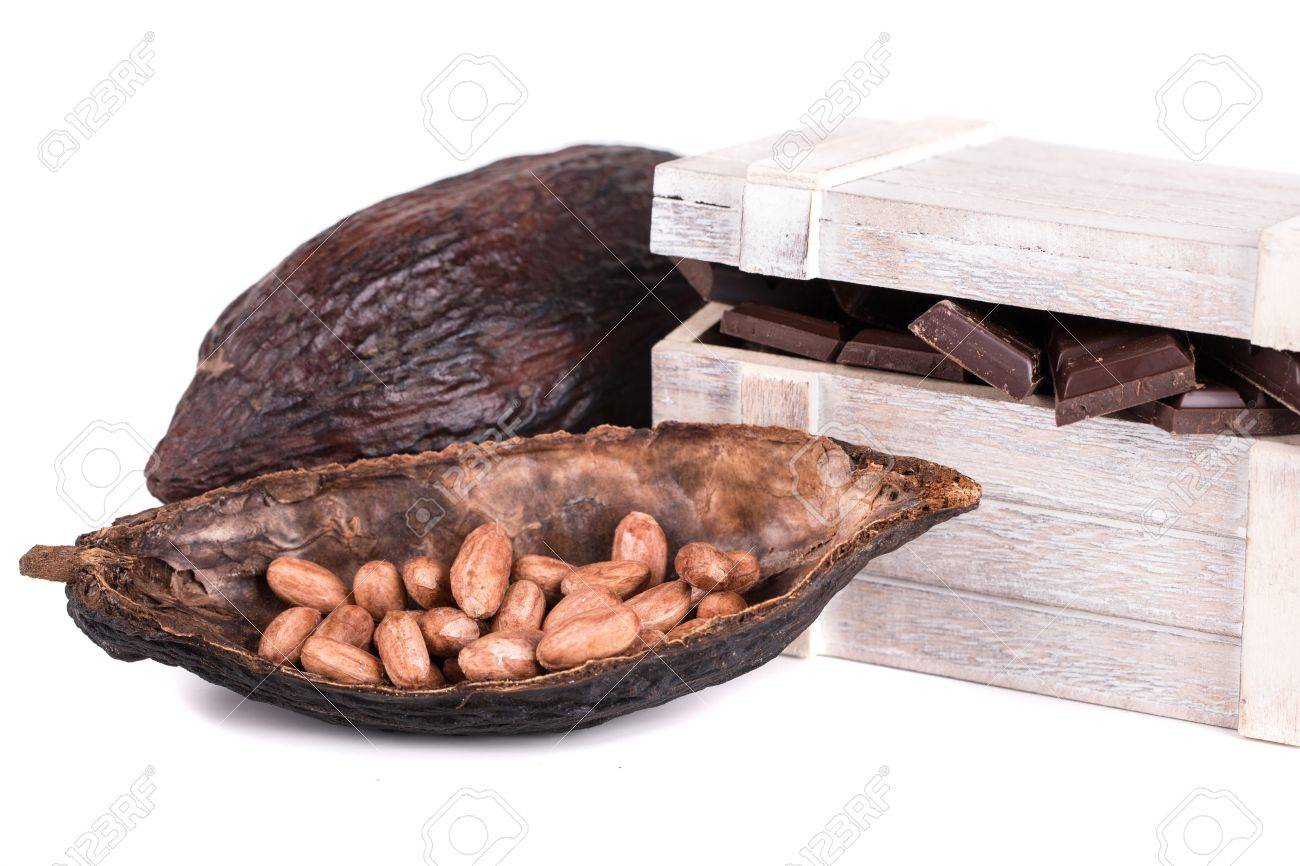 cocoa fruit and ripe on a white background Stock Photo - 19844191