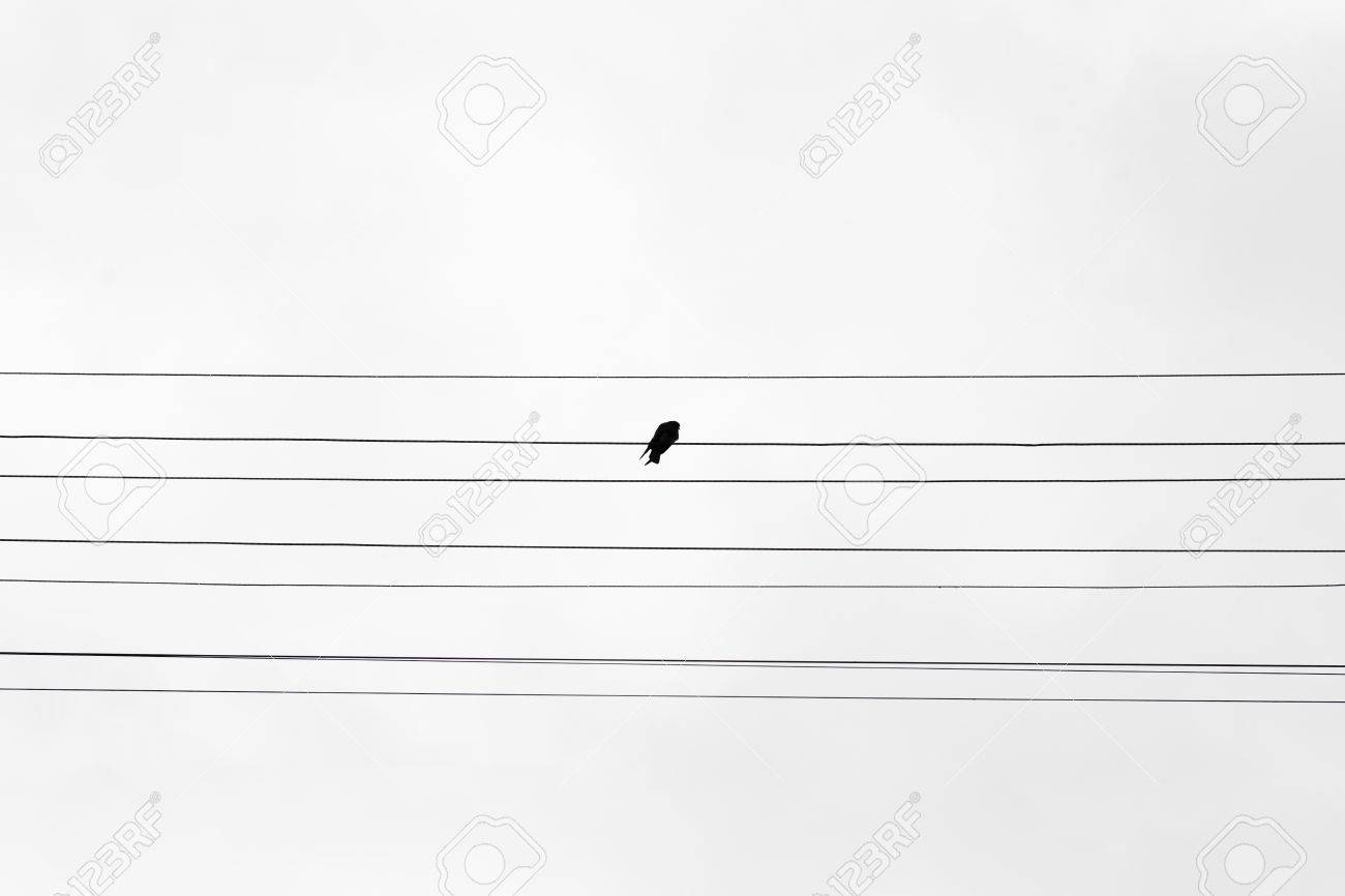One Black Bird Sitting On Barbed Wire Symbol Of Loneliness Stock ...