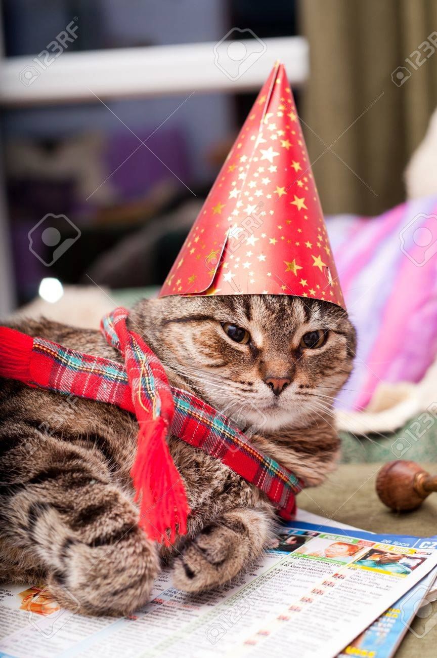 Funny Domestic Cat Wearing A Birthday Hat And Scarf Stock Photo