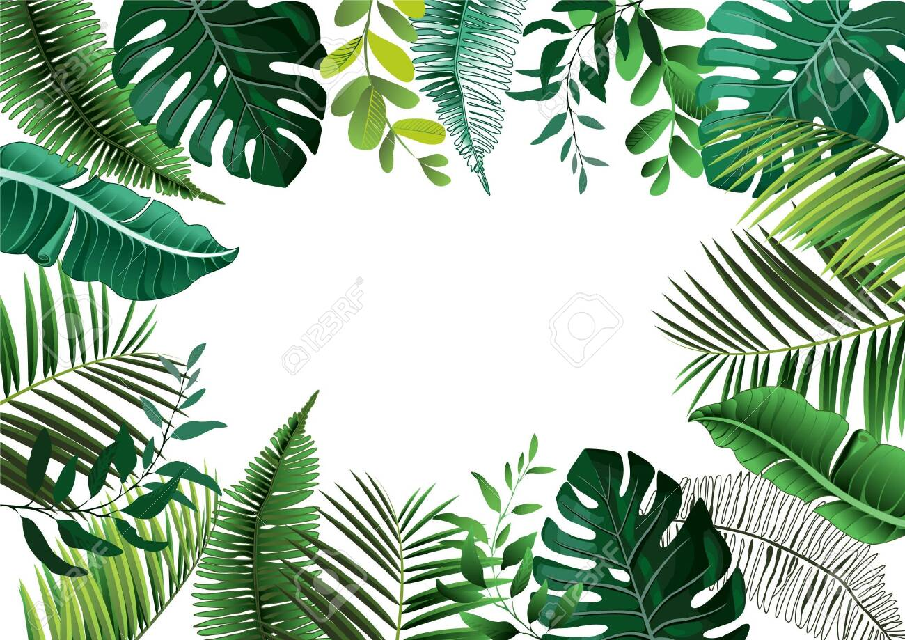 Vector tropical botanical plants with coconut and banana leaves - vector graphic - 147593847