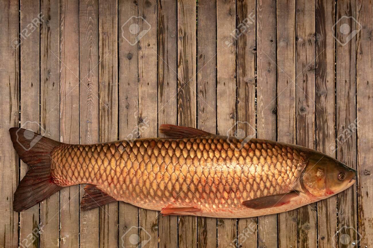 Fish white carp lying on the table. Fresh fish - 149829671