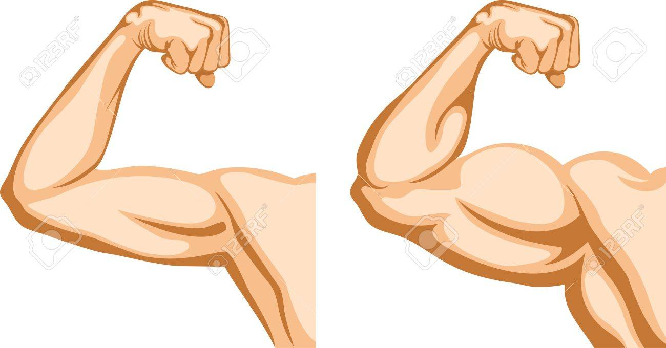Arm Muscle Cartoon