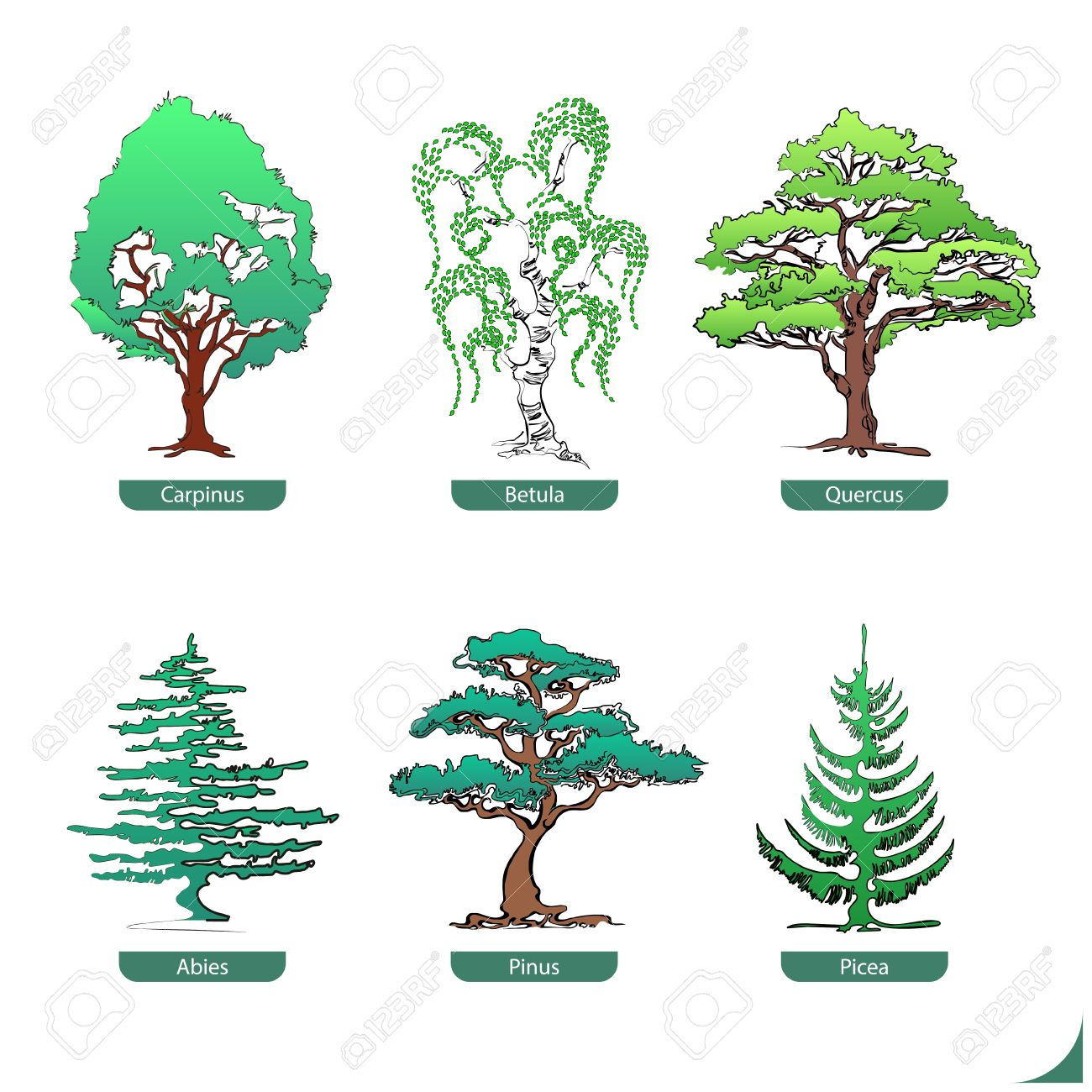 Hand Drawn Collection Of Softwood And Hardwood Trees