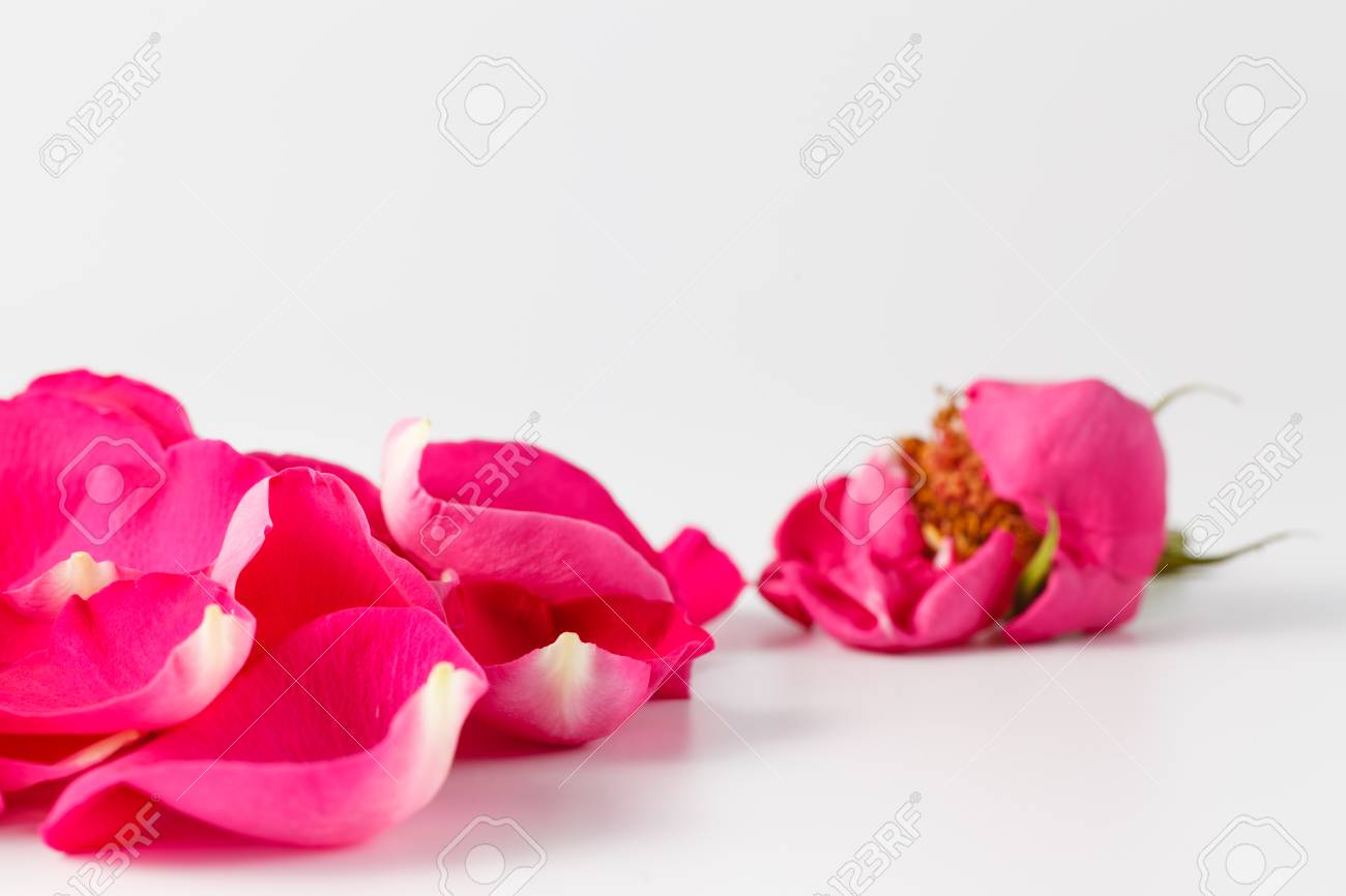 Wedding Detail Idea. Rose Petals And Gold Wedding Rings Stock Photo ...