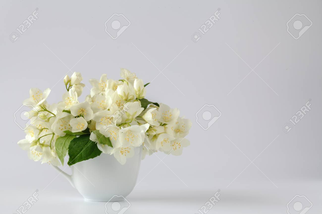 Bunch Of Jasmine Twigs With Open Buds In A White Jug Stock Photo