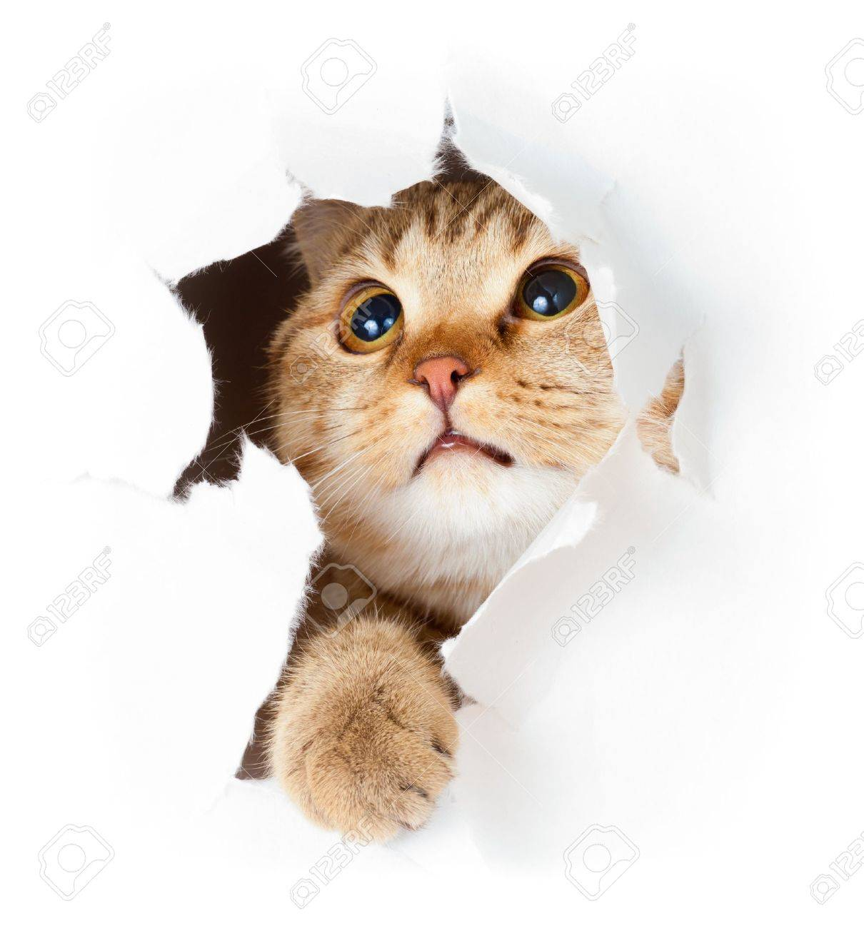 cat in paper side torn hole isolated Stock Photo - 9982030