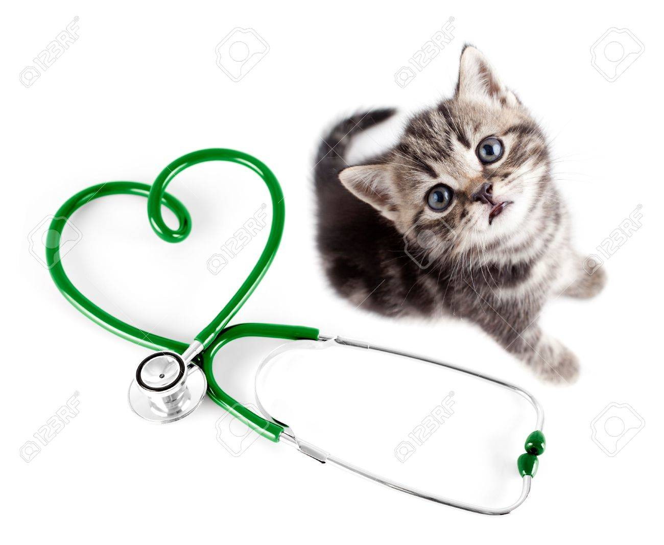 Veterinary for pets concept Stock Photo - 14559739