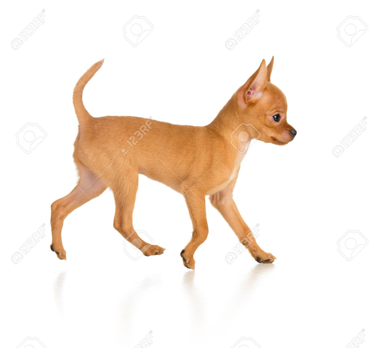 dog running side view