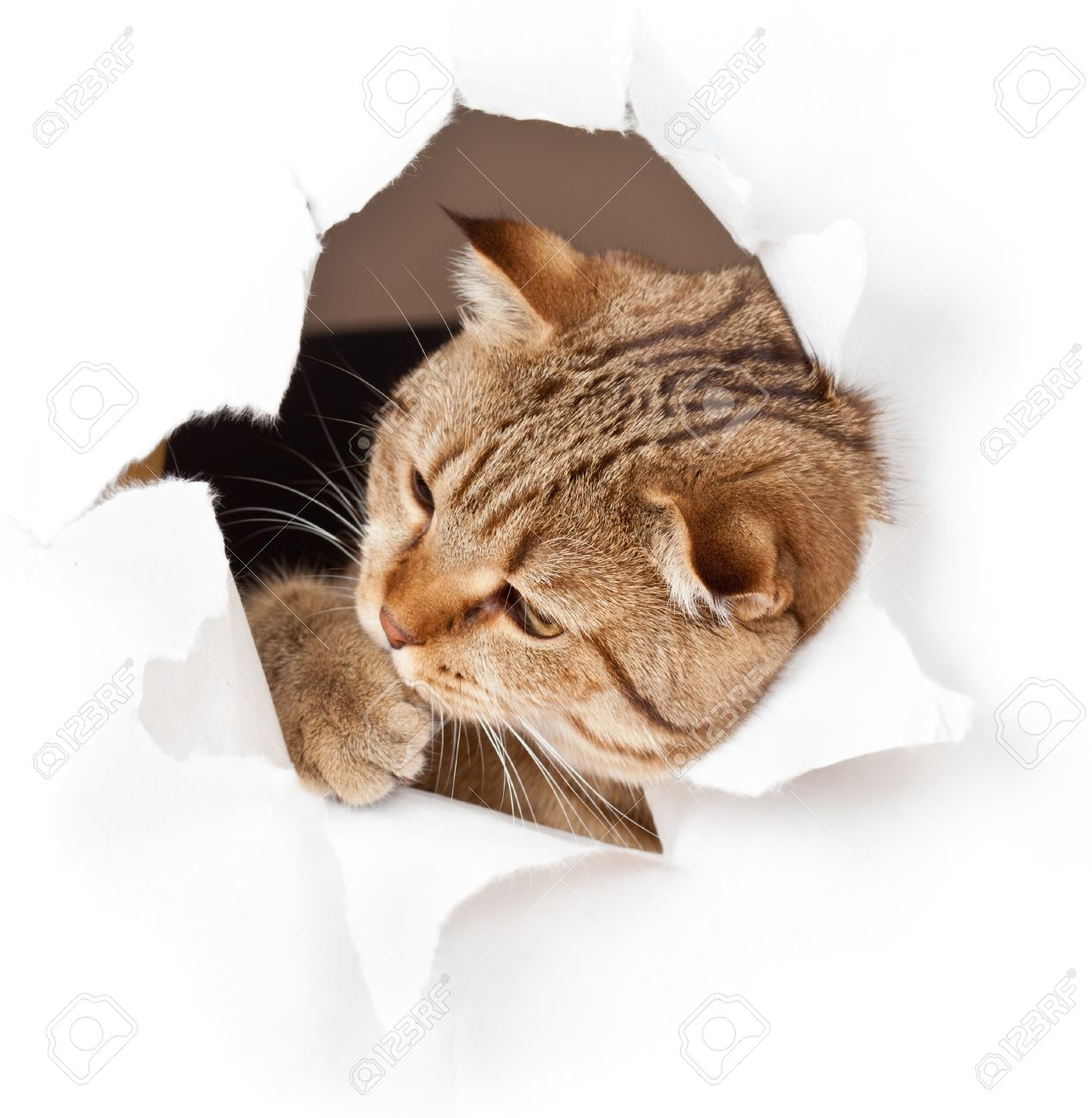 cat in paper side torn hole isolated Stock Photo - 19114660