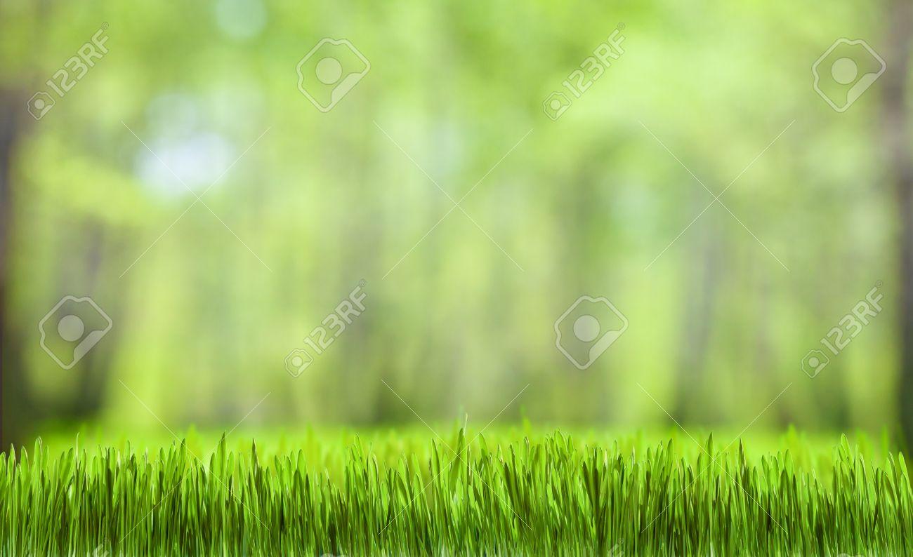 Verde Erba E Forestali Natura Sfondo Per Il Desktop Wallpaper