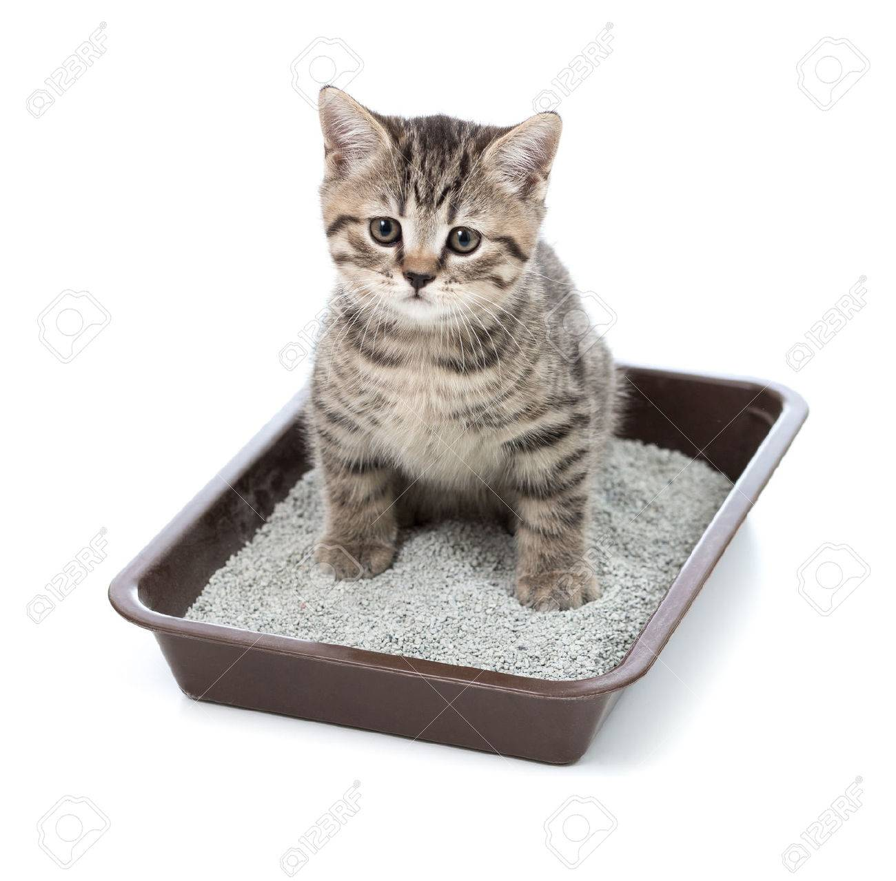 The History of Kitty Litter