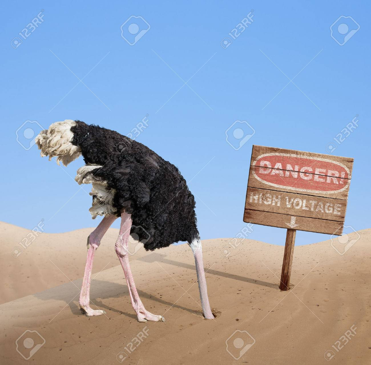 scared ostrich burying head in sand under danger sign stock photo 33921670