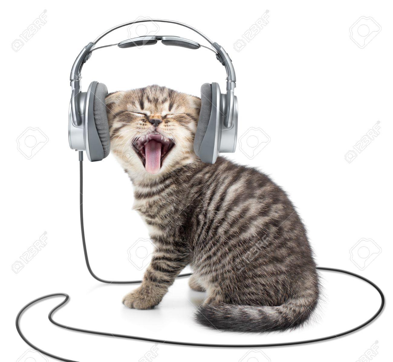 Singing Kitten Cat In Wired Headphones Listening To Music Stock ...