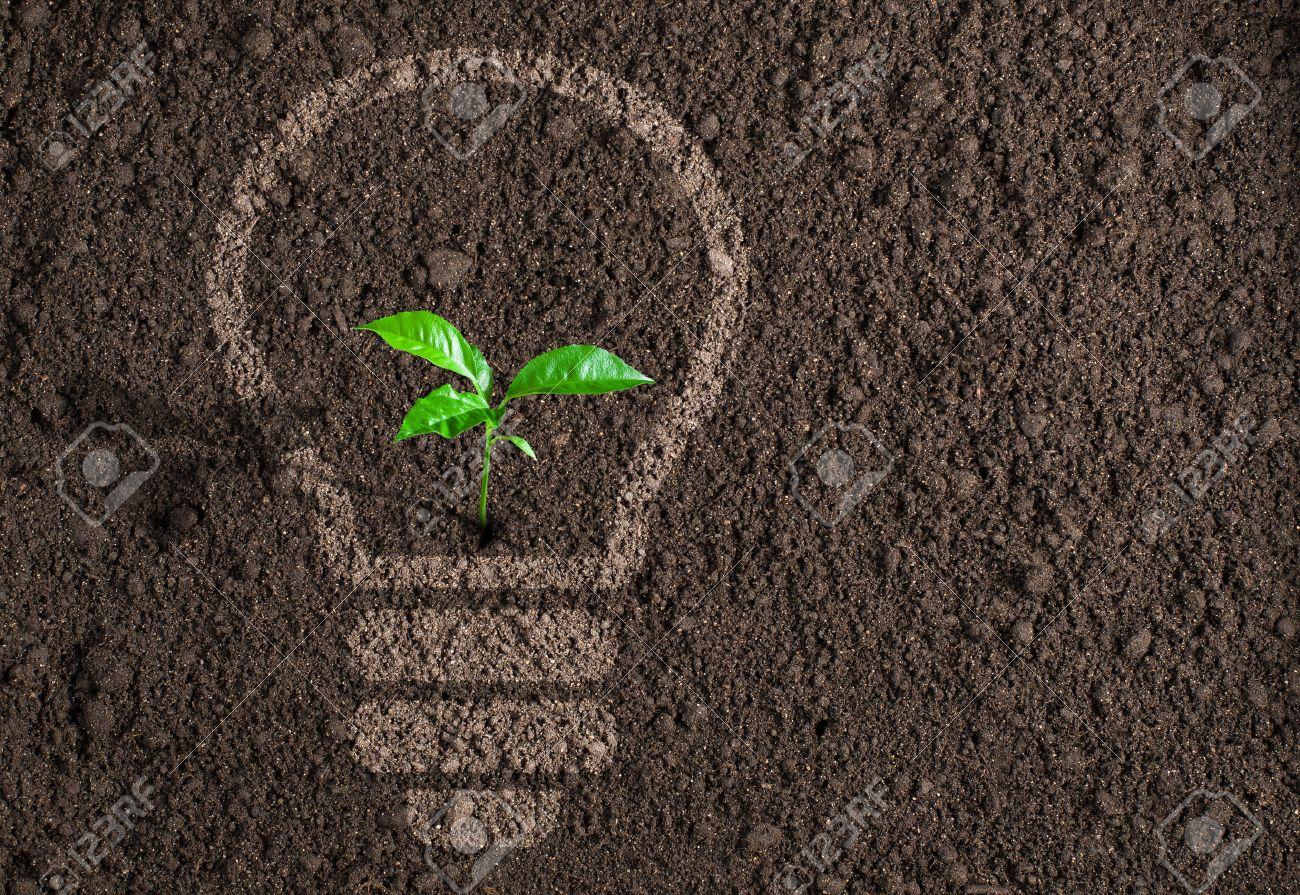 Green plant in light bulb silhouette on soil background - 37204920