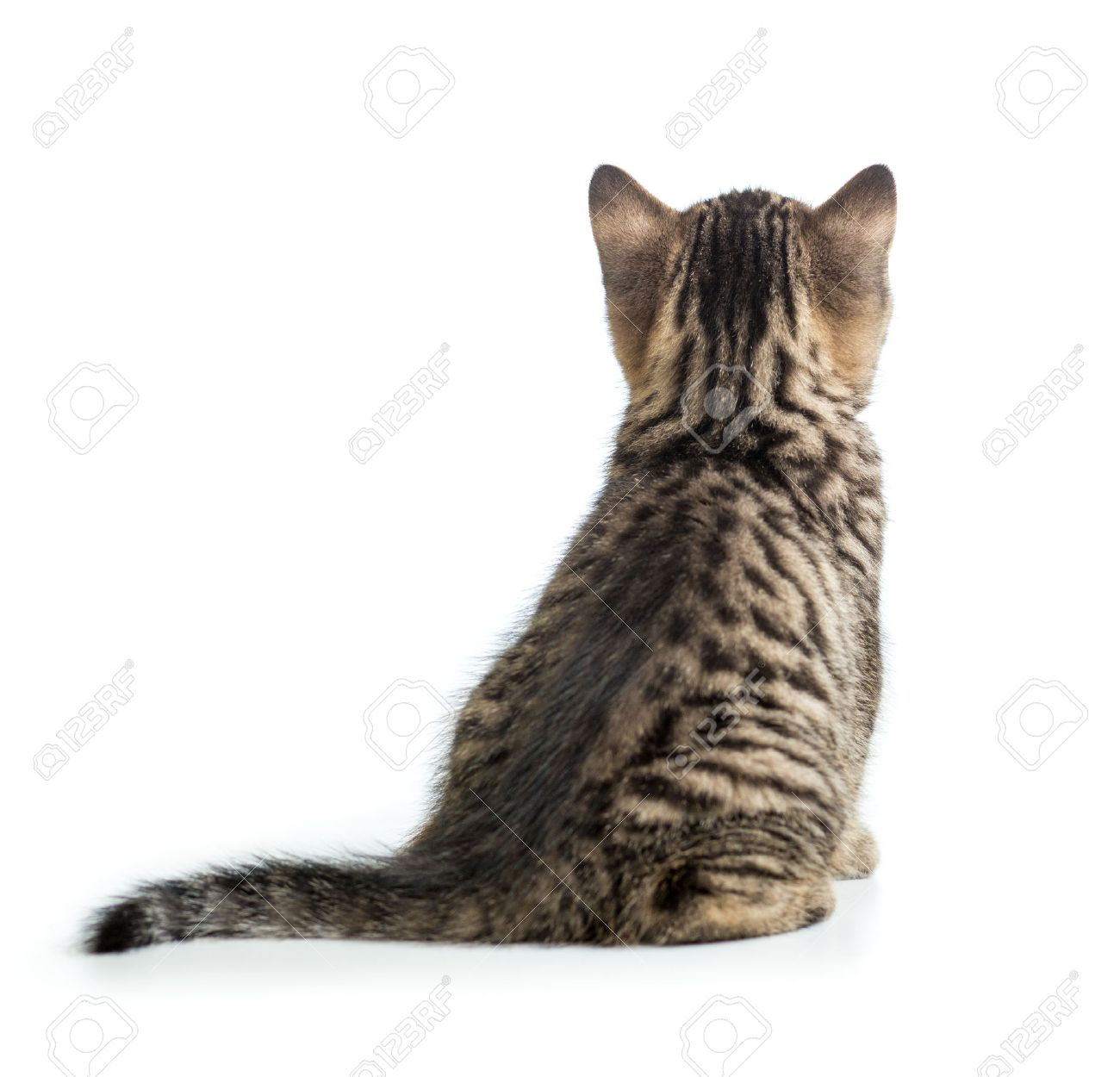 Cat back view sitting isolated - 57346746