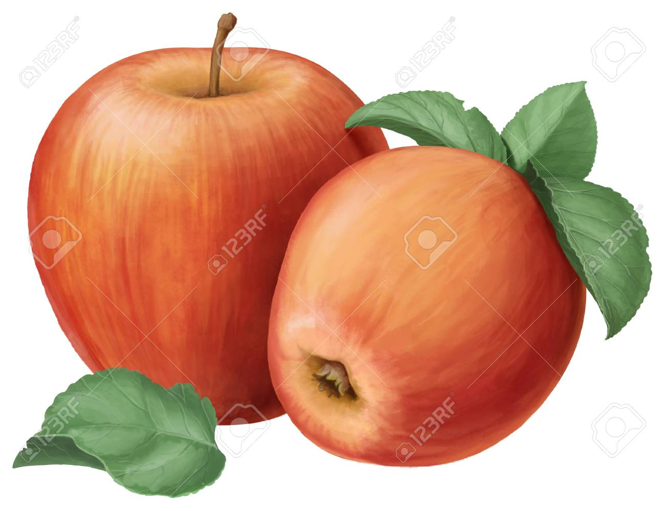 two red apples and leaves on a white background Stock Photo - 20900982
