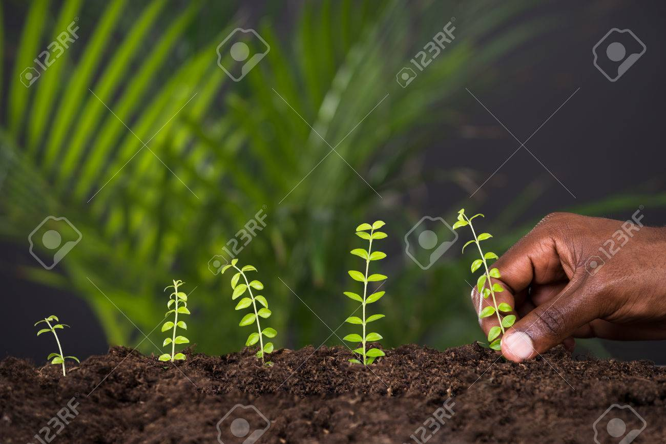 Close-up Of Person's Hand Planting Plant In Soil - 63884611