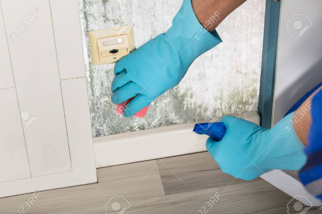 Close-up Of A Person Hand Cleaning Mold From Wall Using Spray Bottle And Sponge Standard-Bild - 73200990
