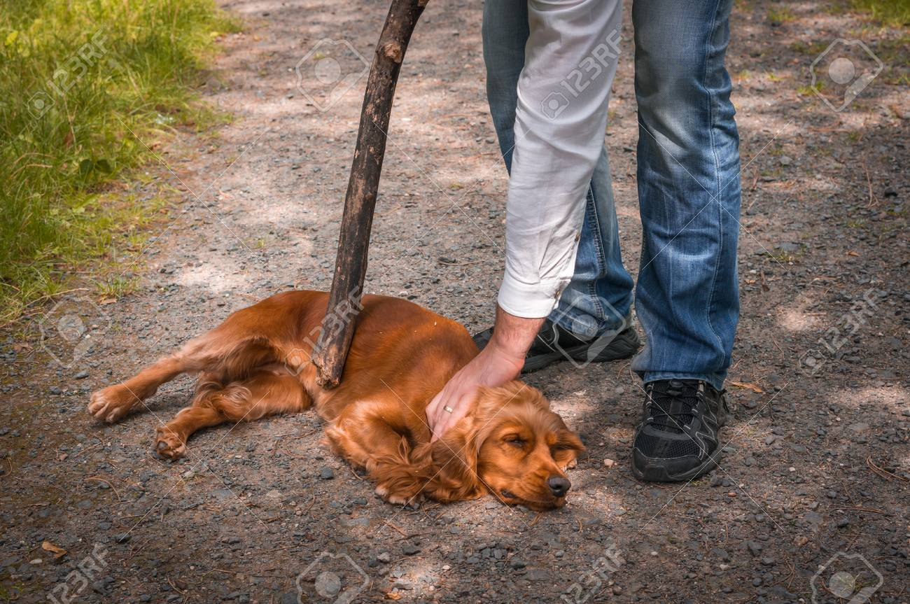 Man holds a stick in hand and he wants to hit the dog - dog abuse Stock Photo - 73502973