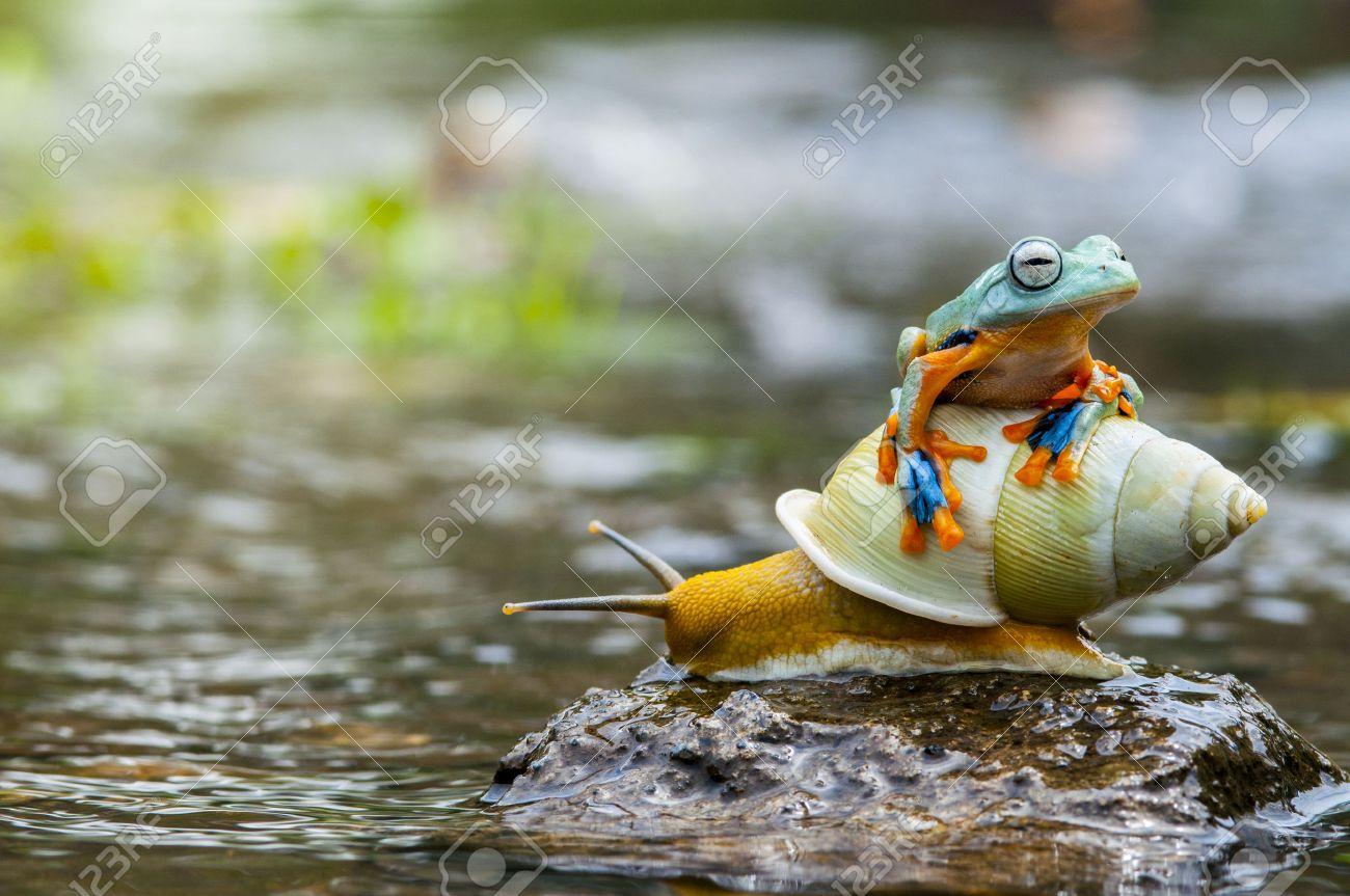 Micro shot of flying frog - 64286930