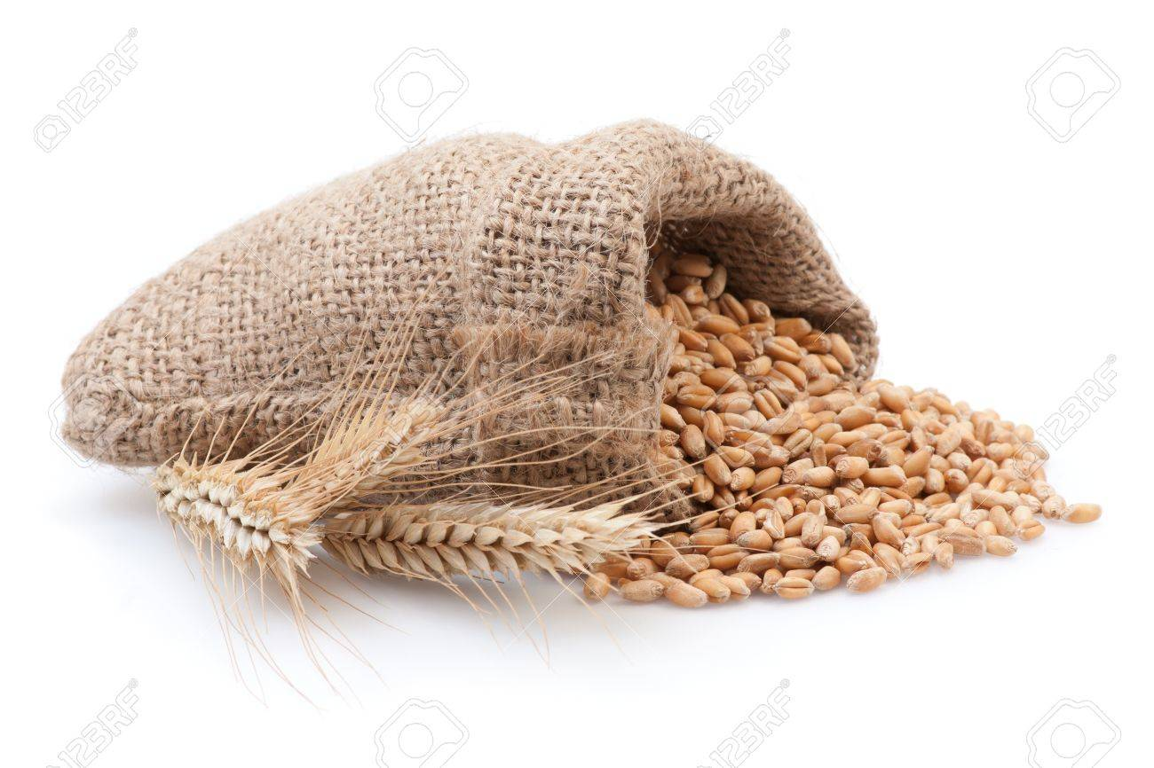 Grains in small burlap sack isolated on white background. Stock Photo - 18090678