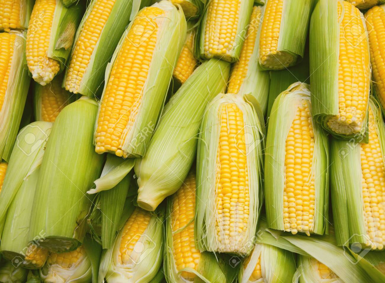 Fresh raw yellow corn in the street market. Organic product suitable for vegeterians and vegans. Healthy food concept background - 131672065