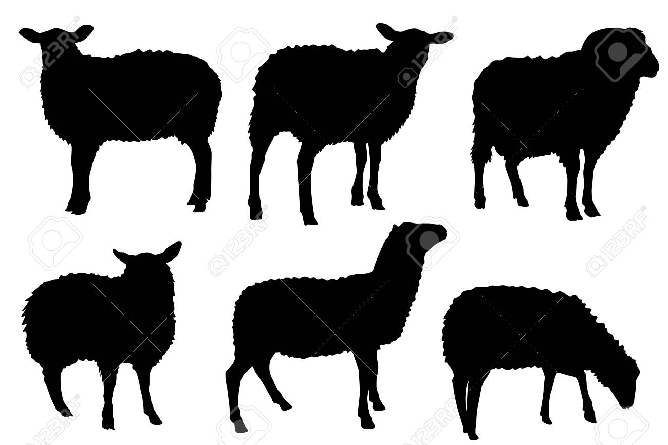 Sheep Lamb Silhouette Vector Set For Multipurpose Use Like Back