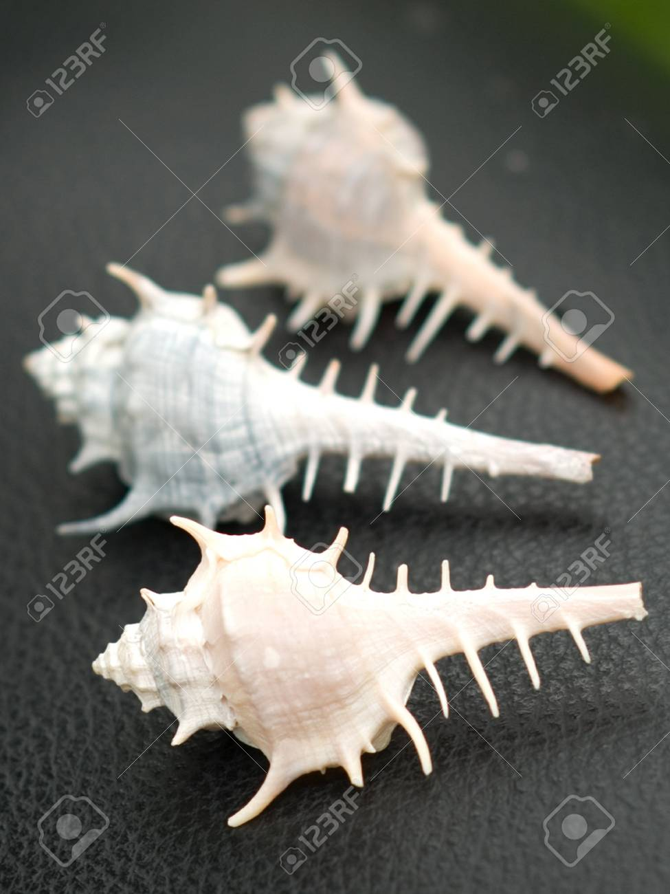 The Collection of Seashells Stock Photo - 5246798