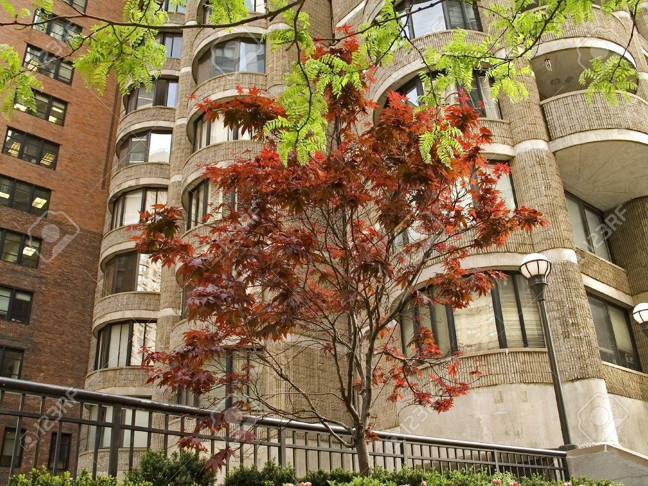 Some Nice Trees Grow Out Side A High Rise Apartment Building In Manhattan.  Stock Photo Part 89