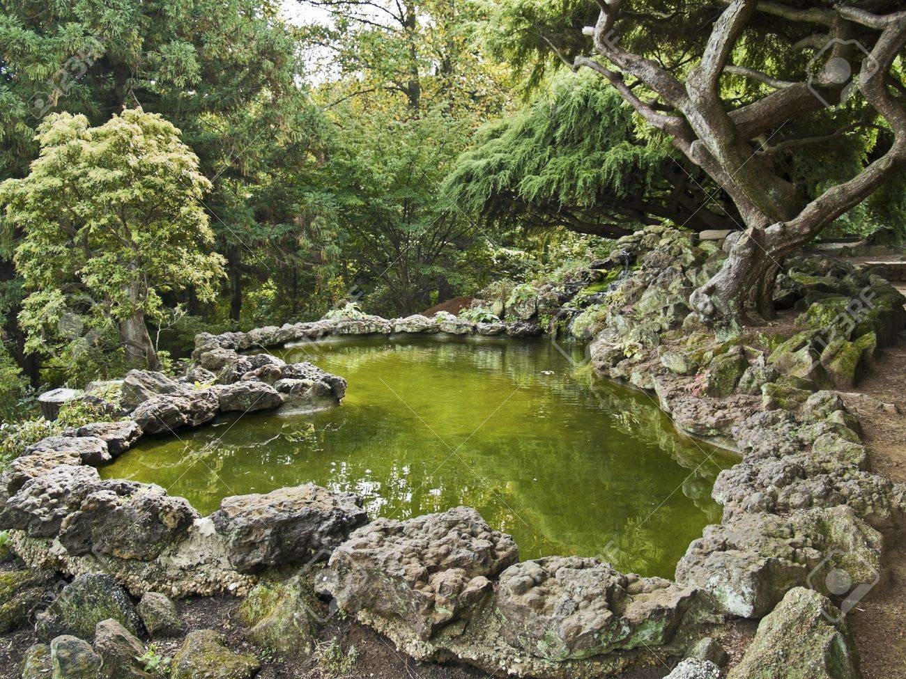 Ornamental evergreen trees - A Japanese Style Landscaped Ornamental Garden With Pond And Various Evergreen Trees And Stone Stock