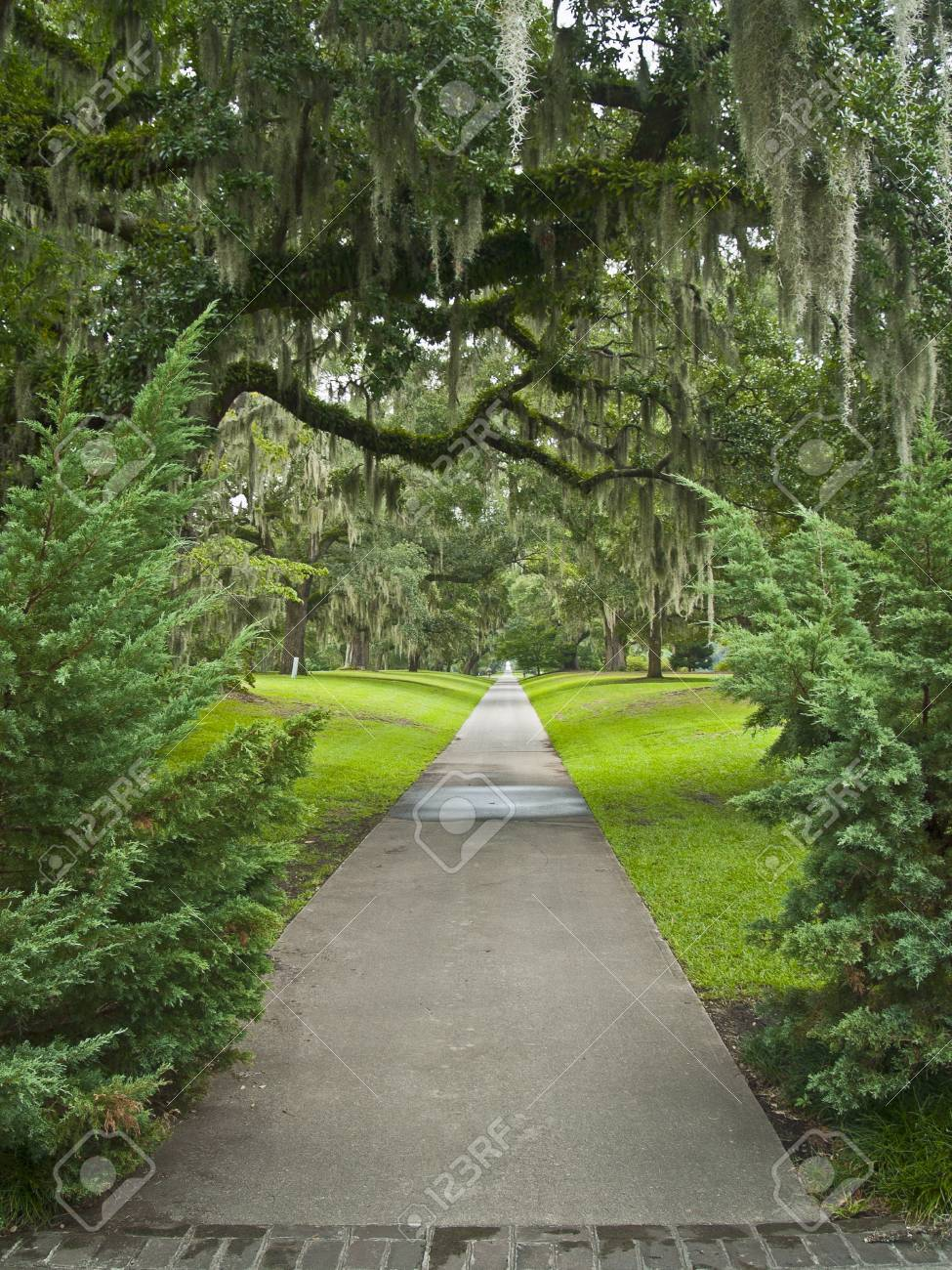 A Path Surrounded By Giant Oaks With Air Ferns In Brookgreen.. Stock ...