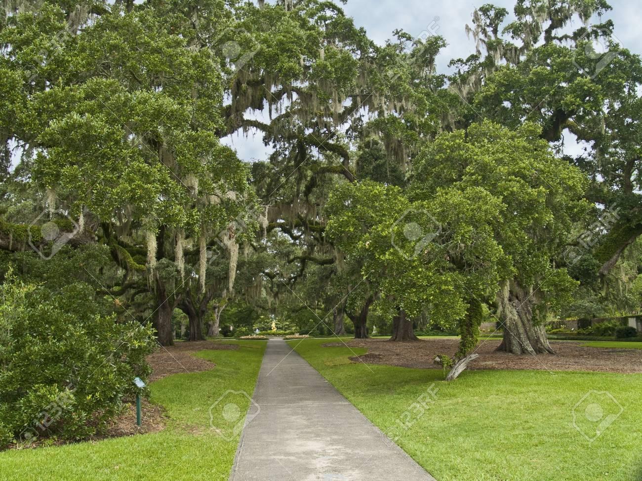 The Giant Oaks Of Brookgreen Gardens Near Myrtle Beach In South ...