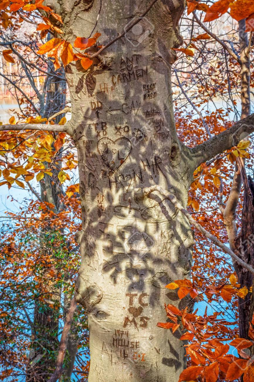 Initials Carved In A Tree Trunk Of This Autumn Scene In Smithville