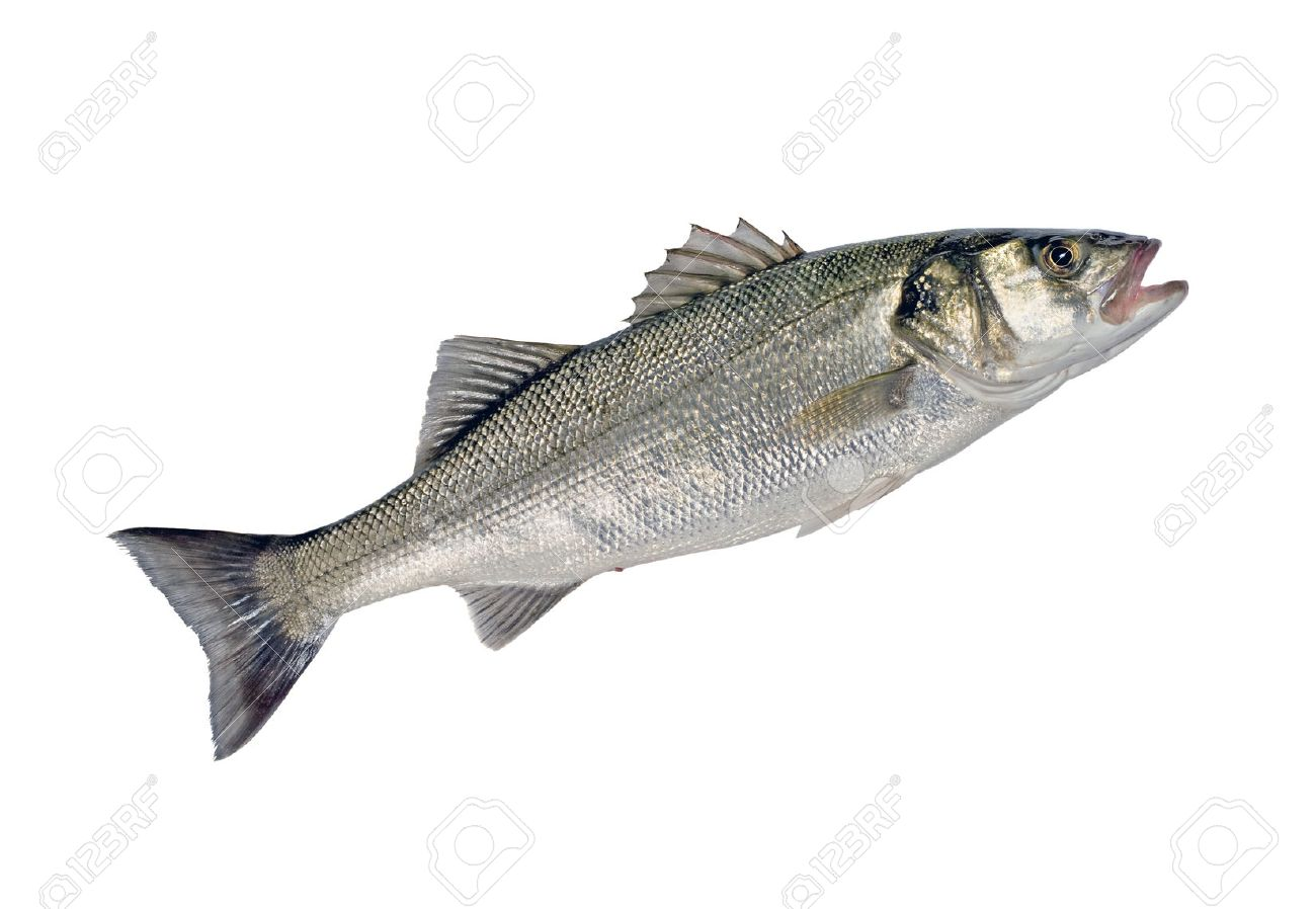[Obrazek: 22740947-zeebaars-vissen-dicentrarchus-l...rgrond.jpg]