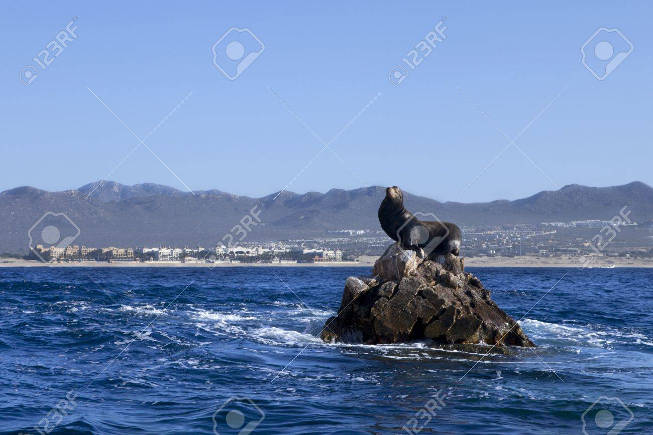 Male sea lion on rocks in the middle of the ocean, with Cabo San Lucas in the background. King of the hill Stock Photo - 11772208