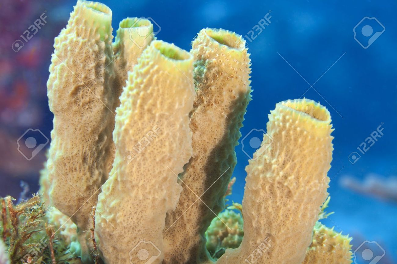 Close-up of Tube Sponges on a Coral Reef - 11995603