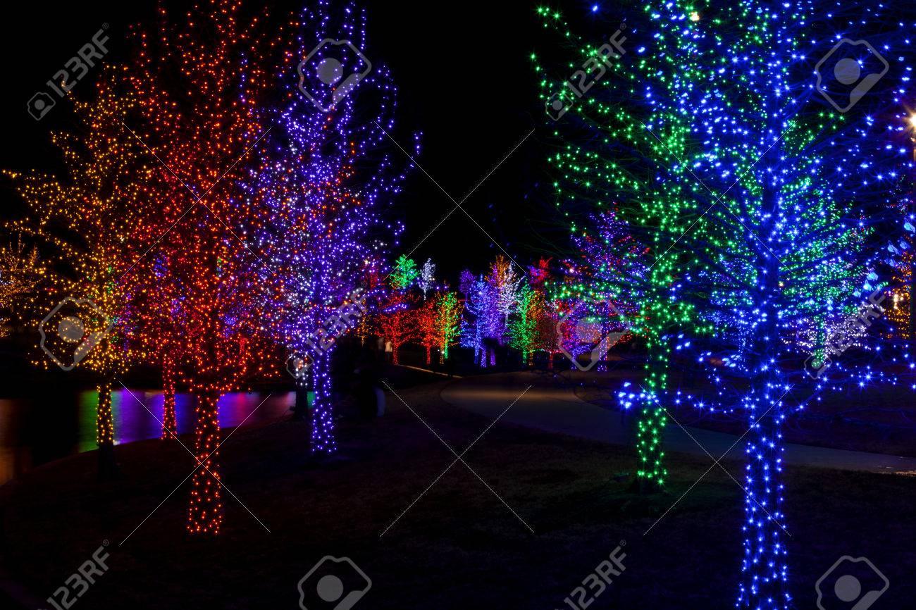 foto de archivo los rboles bien envueltas en luces led para las vacaciones de navidad cada rbol est envuelto en un color