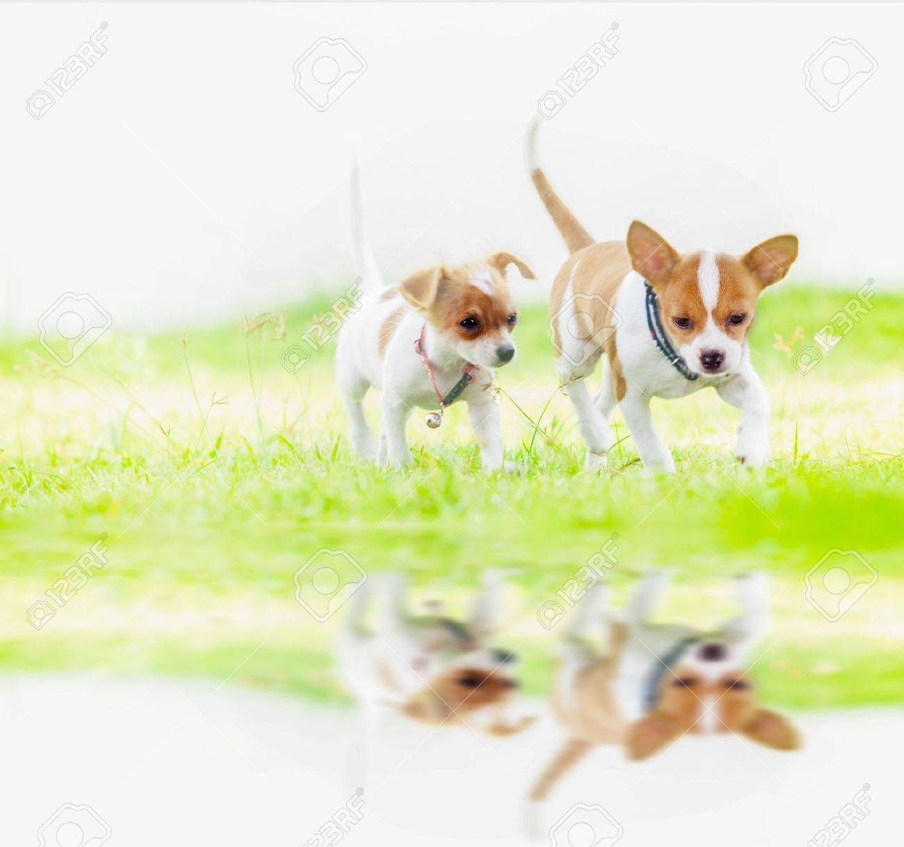 Cute Baby Dog Runing In Nature Background Stock Photo Picture And