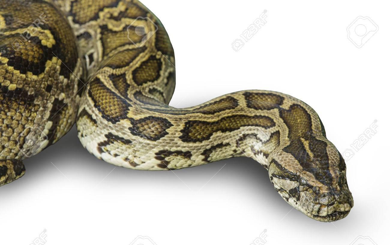 BBC Nature - Boa constrictor snakes sense prey's fading heartbeat