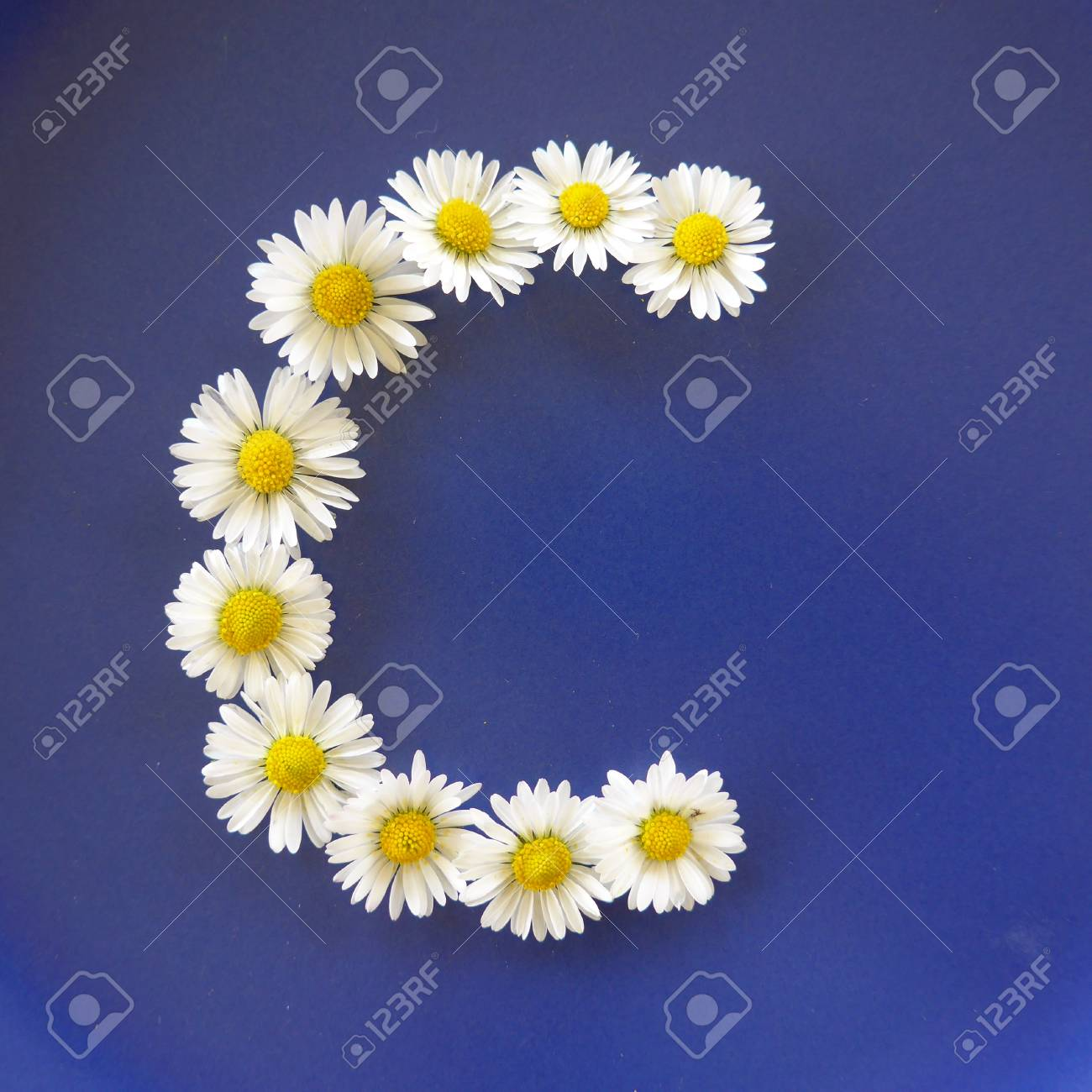 Letter c from white flowers daisies bellis perennis close up letter c from white flowers daisies bellis perennis close up on izmirmasajfo
