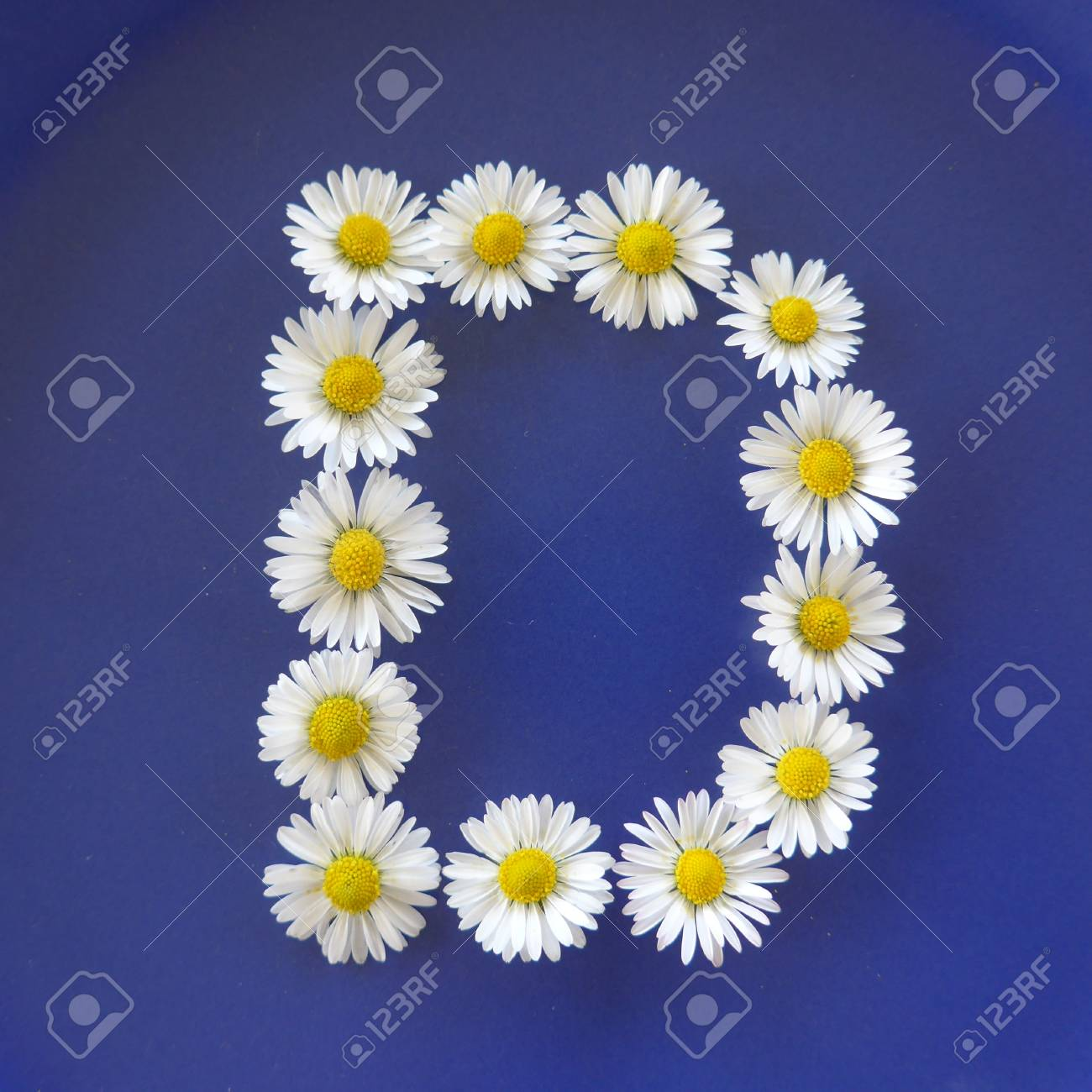 Letter d from white flowers daisies bellis perennis close up letter d from white flowers daisies bellis perennis close up on izmirmasajfo