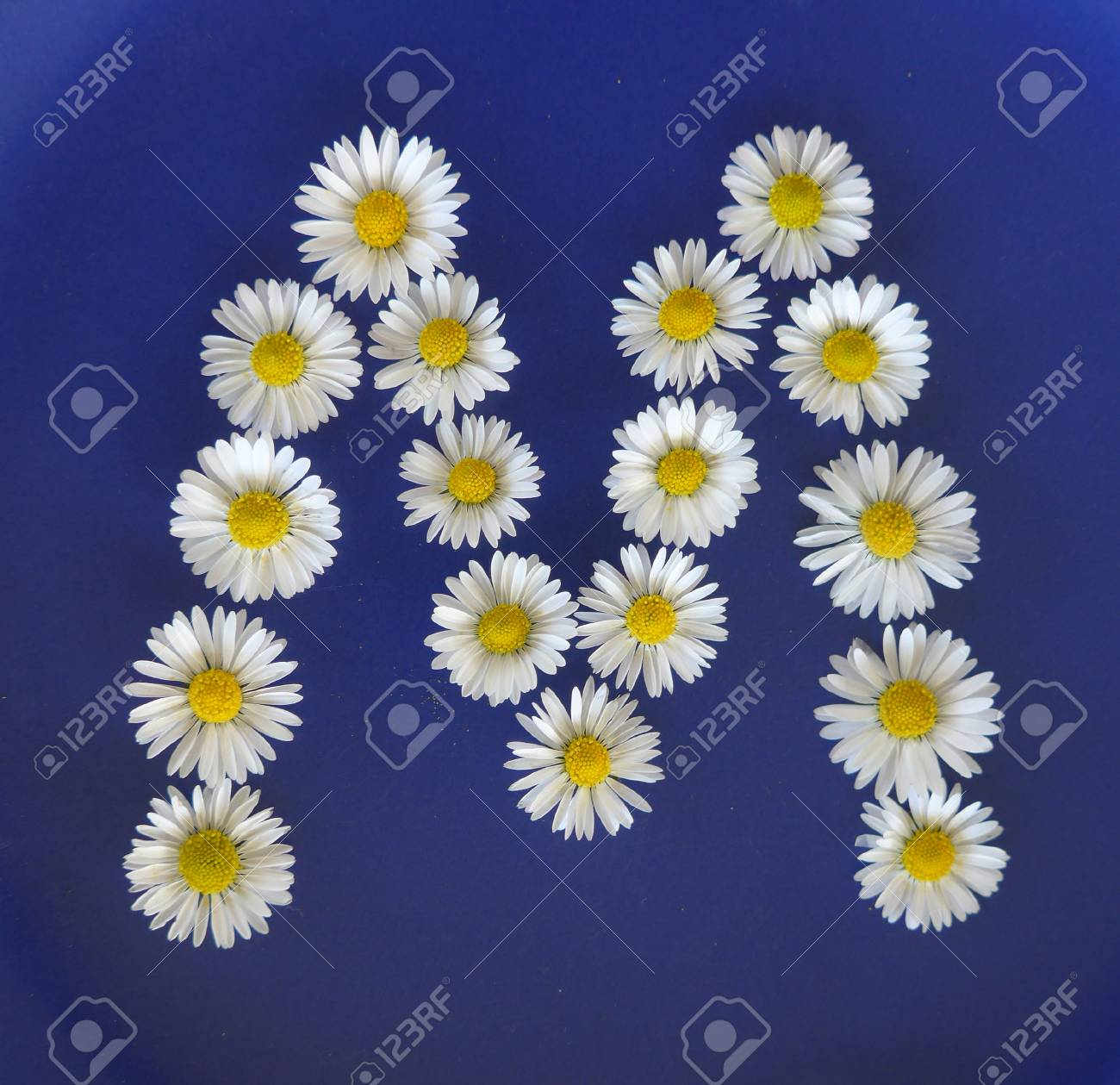 Letter m from white flowers daisies bellis perennis close up letter m from white flowers daisies bellis perennis close up on izmirmasajfo