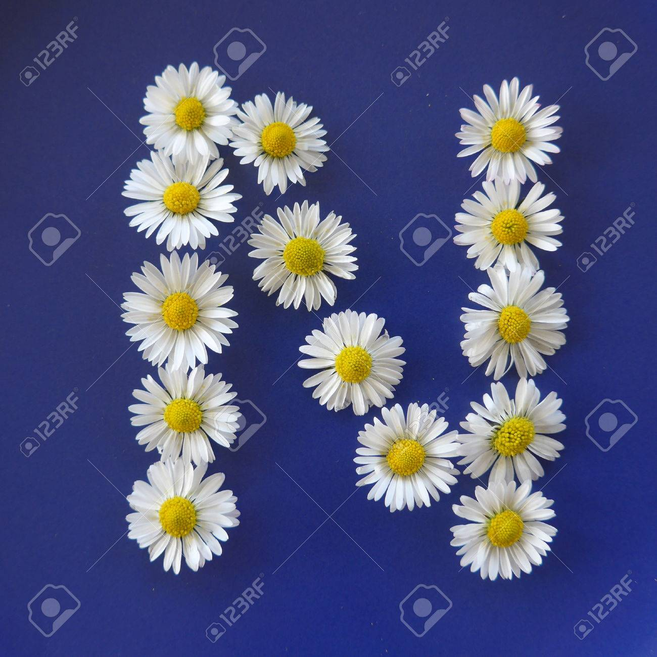 Letter n from white flowers daisies bellis perennis close up letter n from white flowers daisies bellis perennis close up on izmirmasajfo
