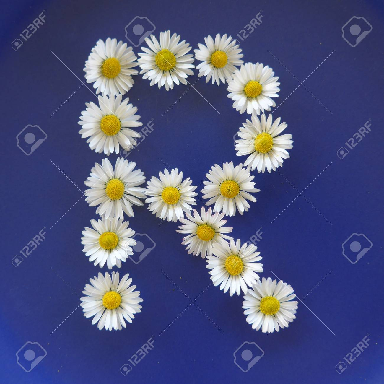 Letter r from white flowers daisies bellis perennis close up letter r from white flowers daisies bellis perennis close up on izmirmasajfo