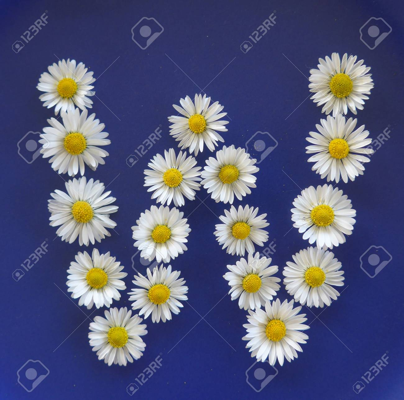 Letter w from white flowers daisies bellis perennis close up letter w from white flowers daisies bellis perennis close up on izmirmasajfo